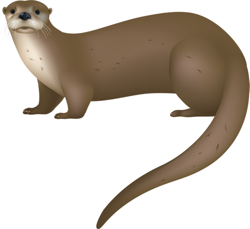 ferret vector cute