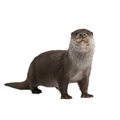 Otter clipart transparent. Waving png stickpng full