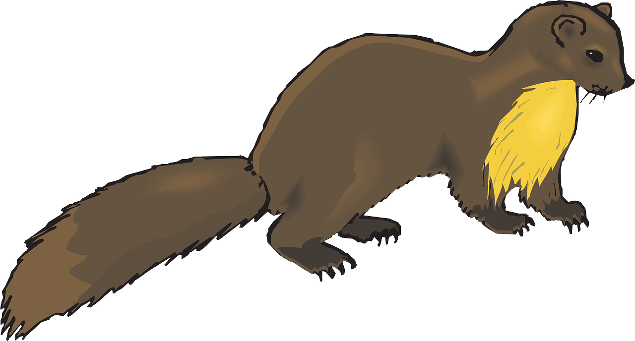 Mink drawing cute. Otter clipart at getdrawings