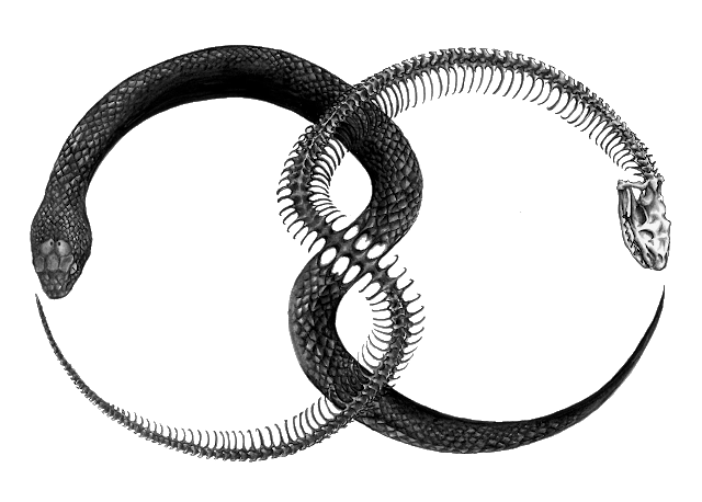 The occult background of. Ouroboros transparent png svg black and white stock