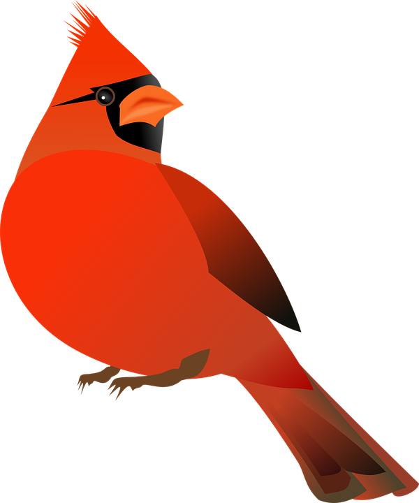 Image result for cardinal. Outside clipart bird picture
