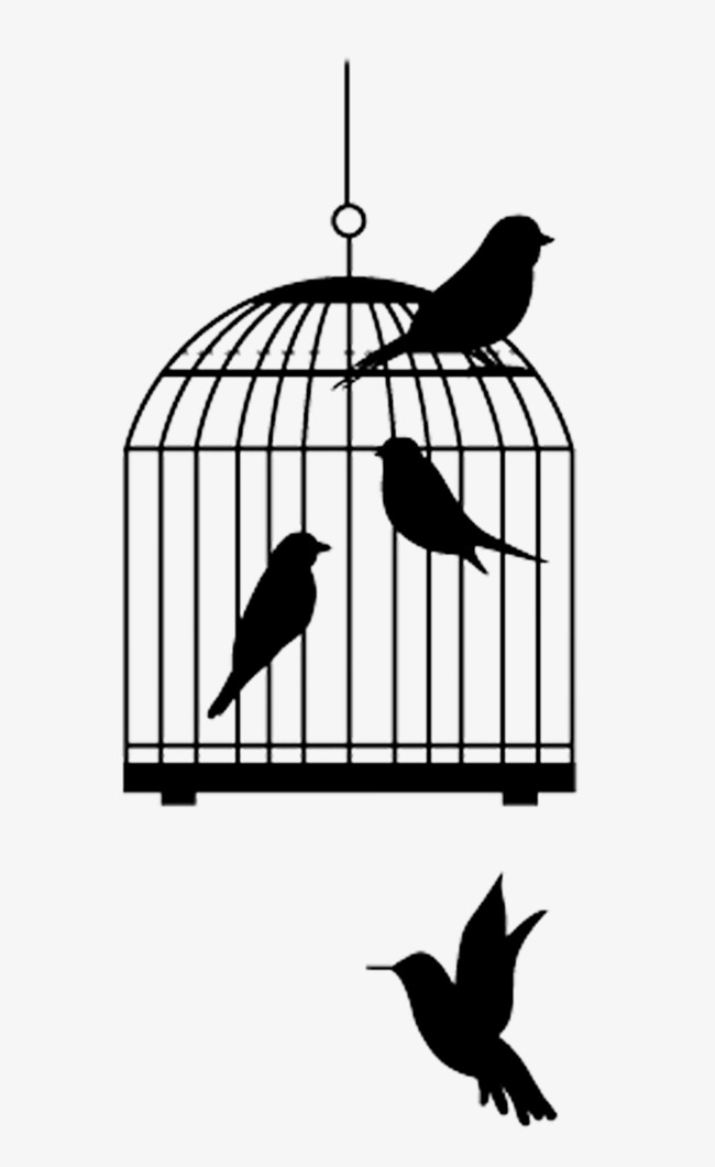 Birds inside and the. Outside clipart bird royalty free stock