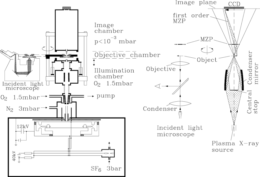Ovary drawing microscope. Layout of the gg