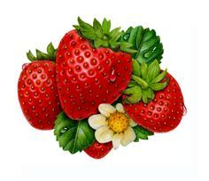Ovate strawberry. Best clipart printables