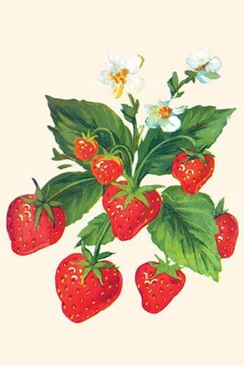 Ovate strawberry. Strawberries and flowers in