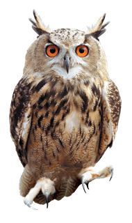 Owl. Why owls can t