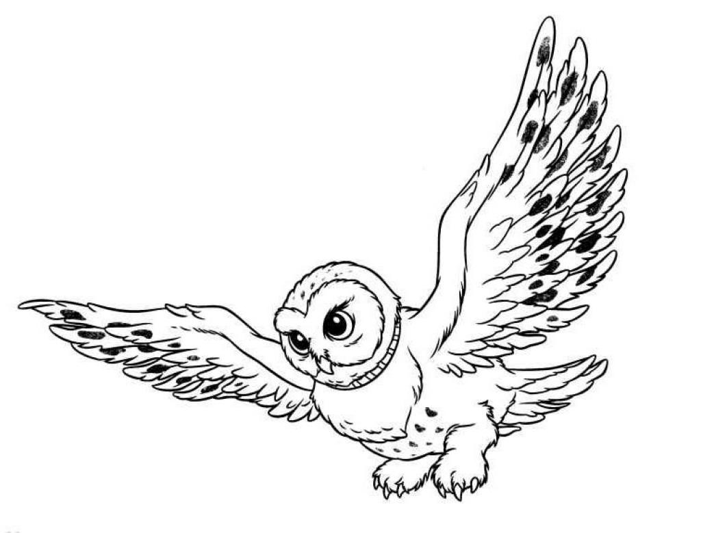 Owl clip art coloring page. Pages owls animated