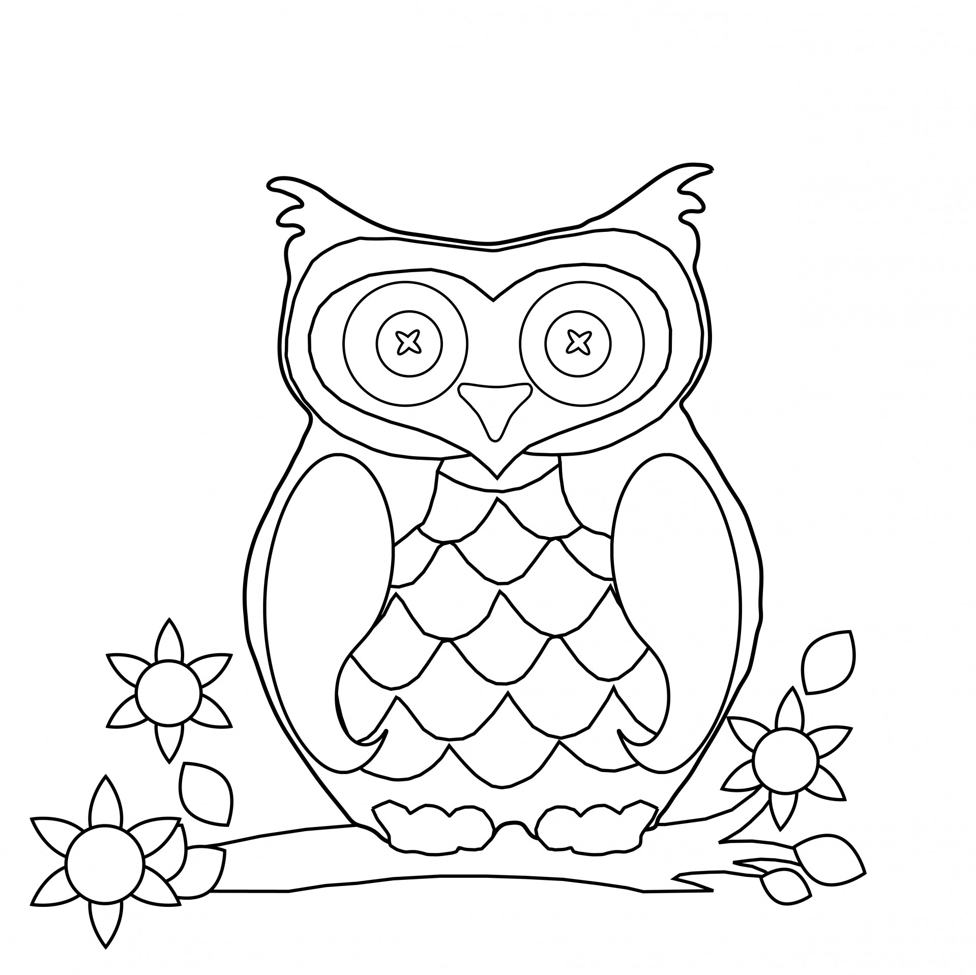 Owl free stock photo. Page clipart coloring graphic free