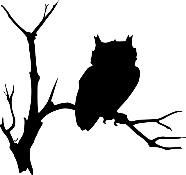 Owl clip art creepy. Best owls images