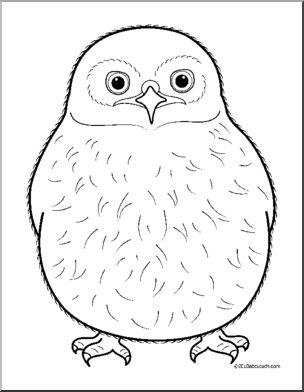 Owl clip art owlet. Baby animals coloring page