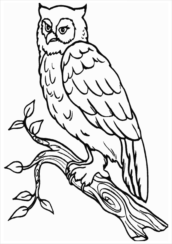 Owl clip art realistic. Outline of owls drawings