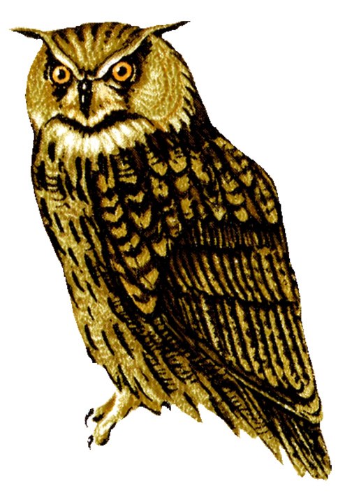 Horned owl png. Realistic clipart clip art