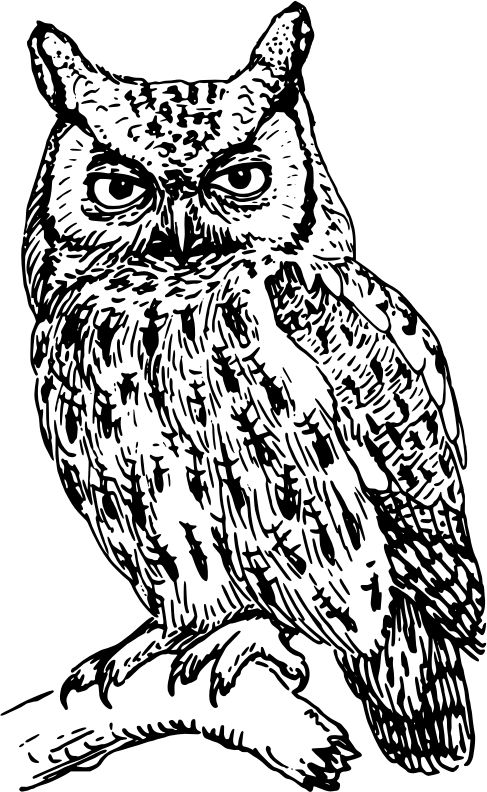 Owl clip art realistic. Drawing at getdrawings com