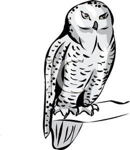 A royalty free clipart. Owl clip art snow owl freeuse download