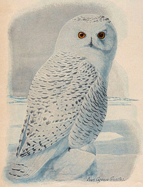 Owl clip art snow owl. Free snowy the graphics