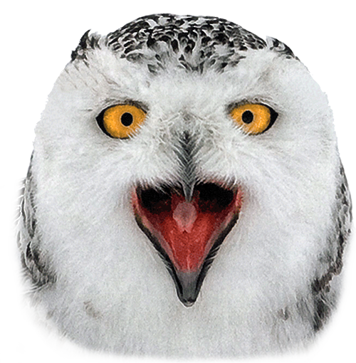 Snow owl png. Snowy face crazywidow info