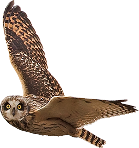 Owl flying png. Photo