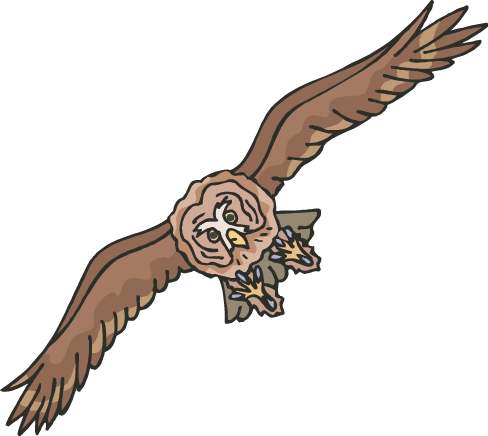 Owl flying png. Owls facts science trek