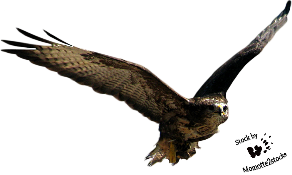 Owl flying png. Cut out stock eagle