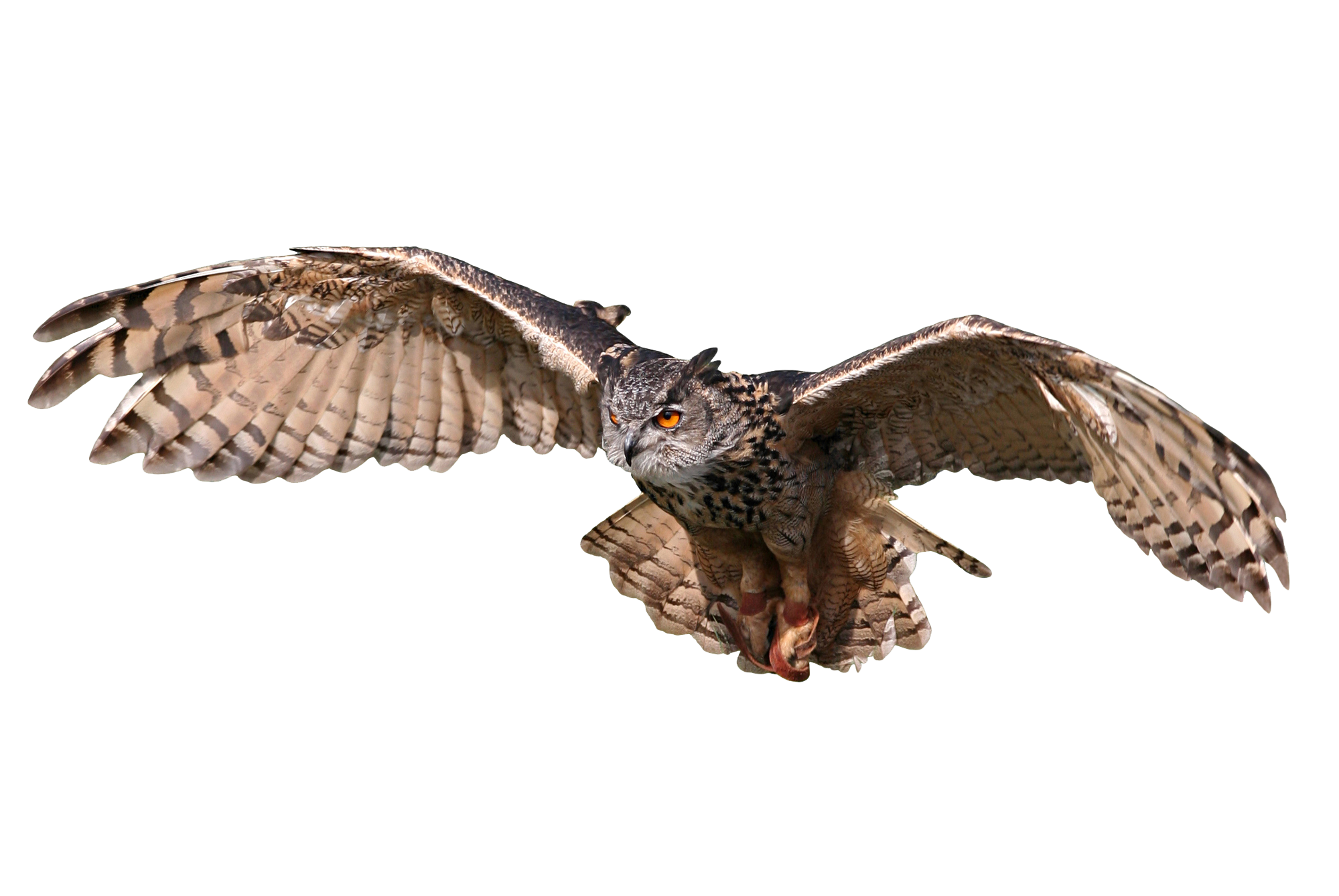 Owl flying png. Contact the owls nest