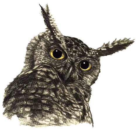 Owl head png. Transparent free images only
