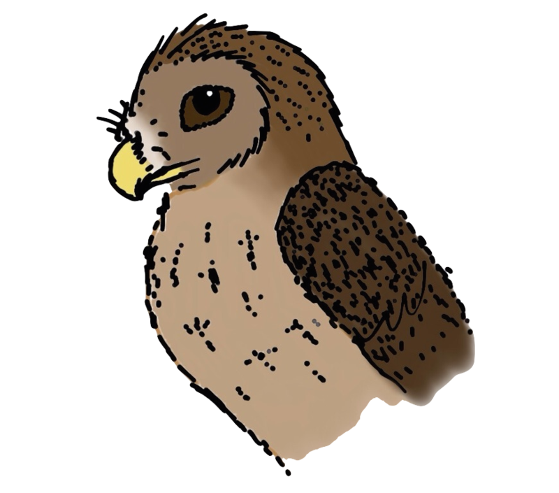 Owl legs png. Glaux by projectowl on