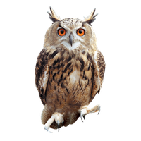 Owl .png. Download free png photo