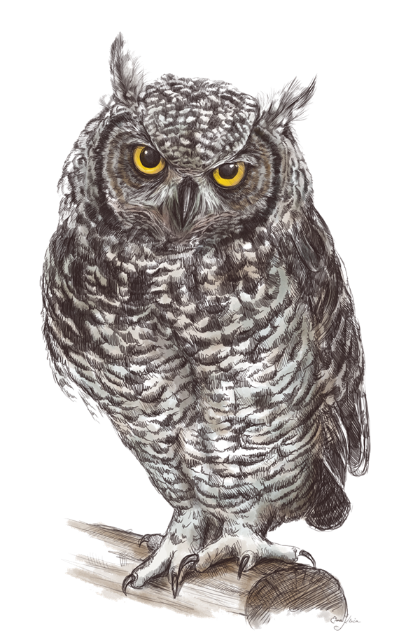 Owl png images. Transparent free only hd