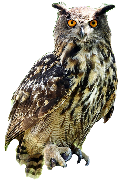 Owl png images. Image deadliest fiction wiki