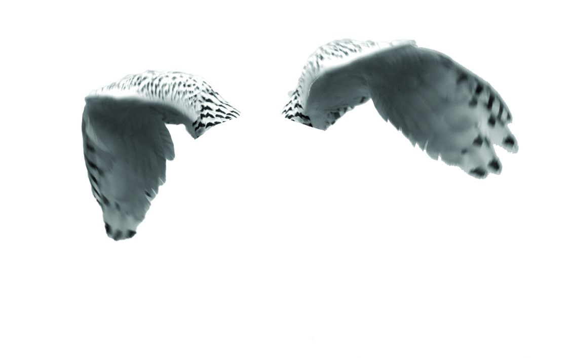 Owl wings png. Snow psd by samm