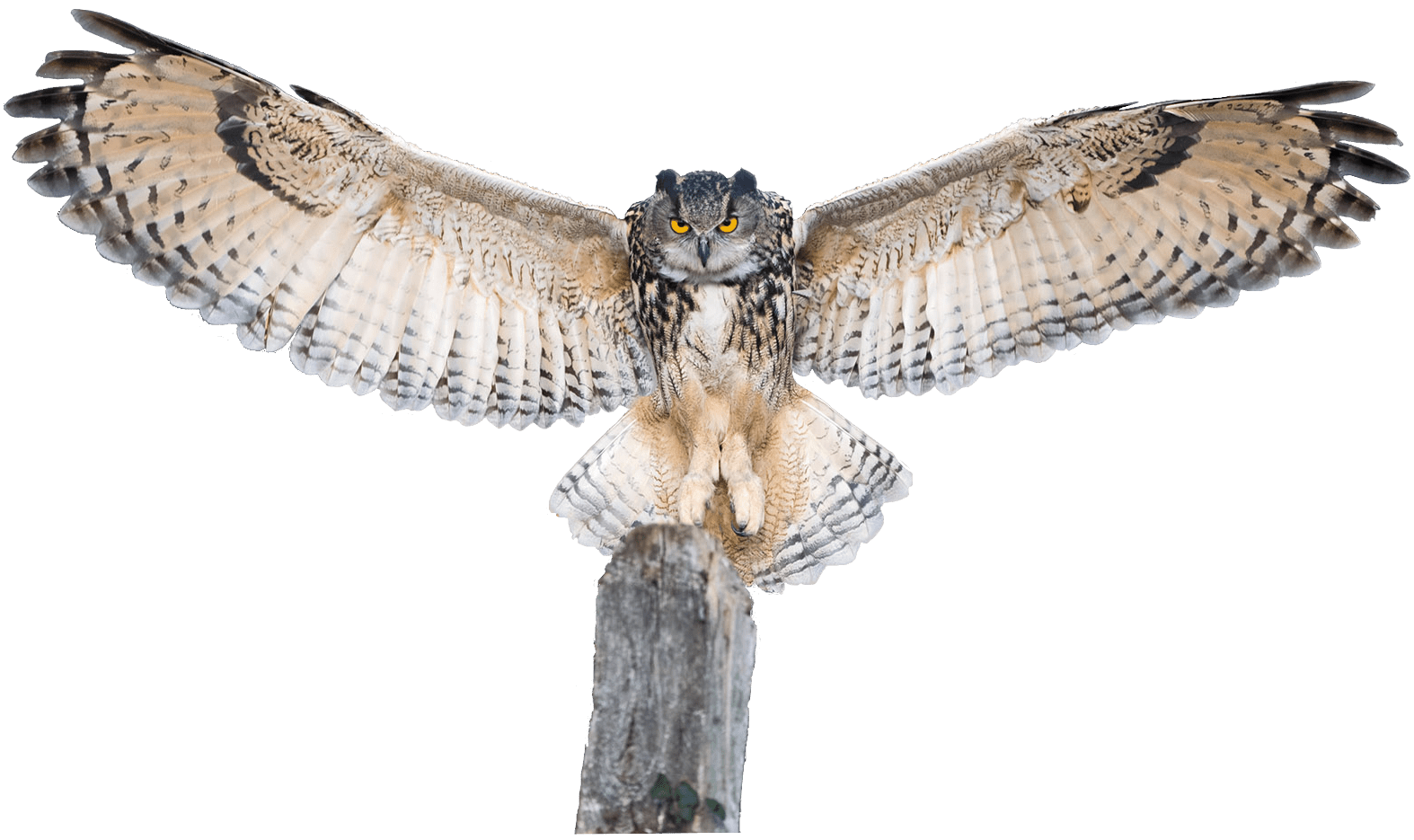 Owl wings png. Spreading transparent image mix