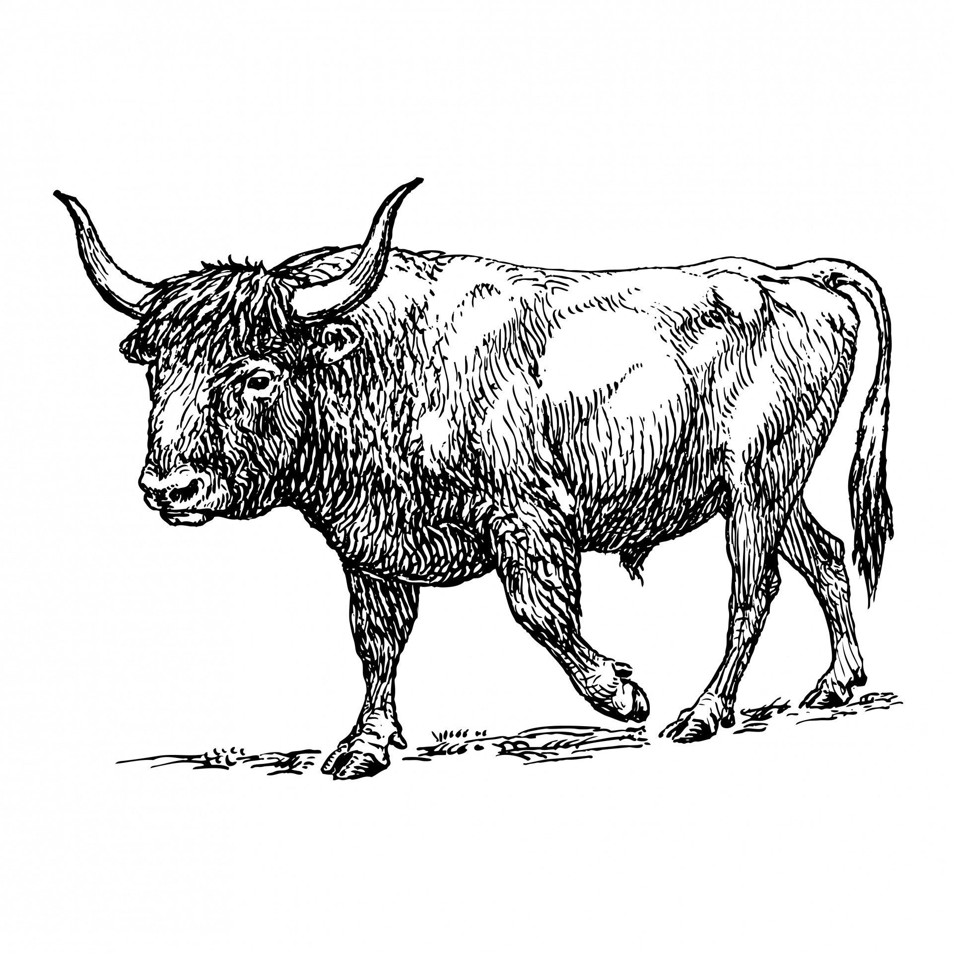 Ox clipart black and white. Illustration free stock photo