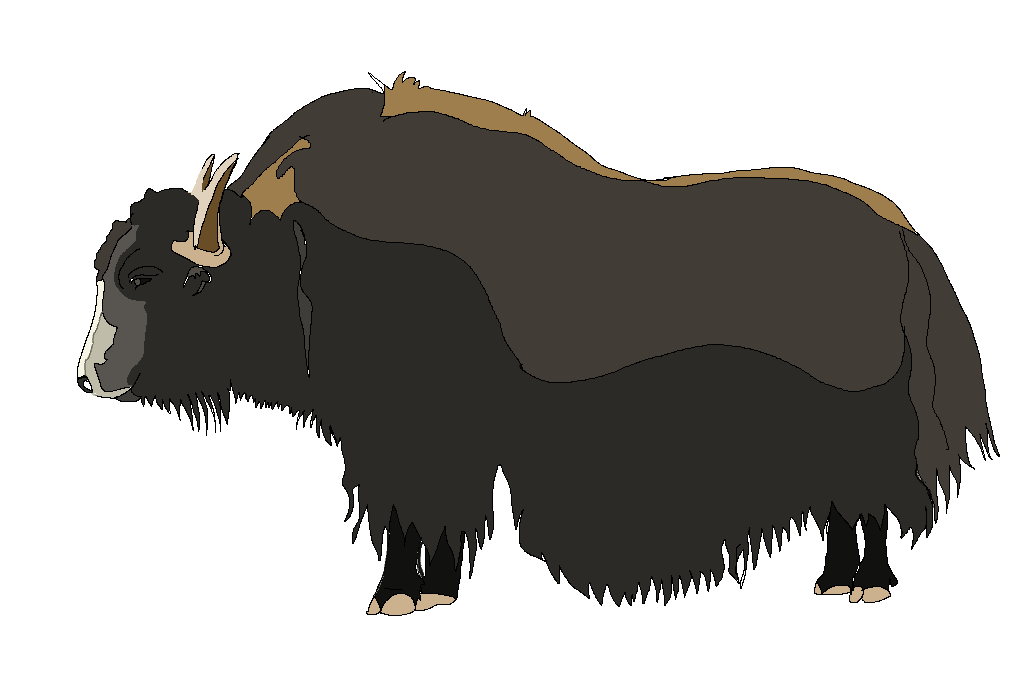 Ox vector yak. Color free images at