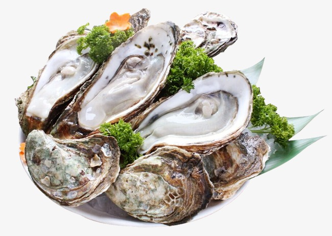 Oyster clipart. Oysters sashimi png image