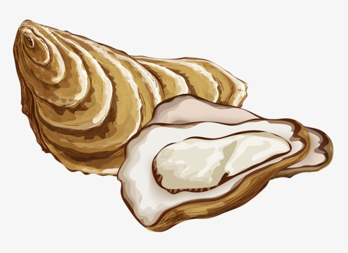 Oysters dead png image. Oyster clipart bivalve vector free stock