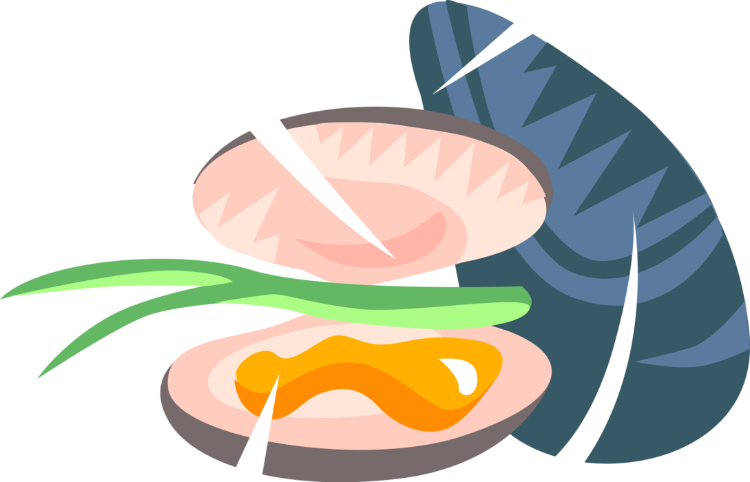Mollusk vector image illustration. Oyster clipart bivalve vector free stock