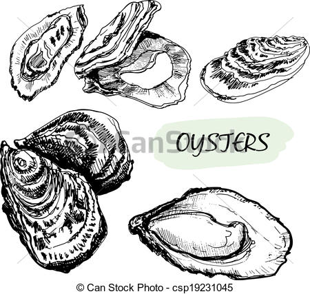 Oysters set of graphic. Oyster clipart bivalve image library library