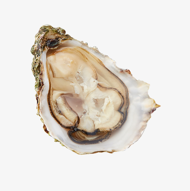 Oyster clipart bivalve. Wild shell seafood delicious image royalty free library