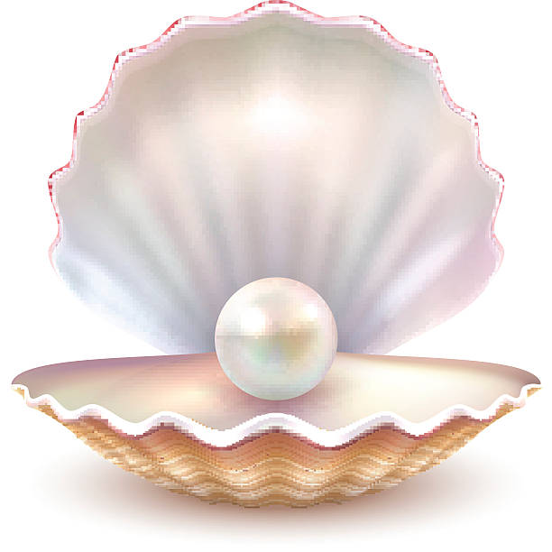 Pearl keywords and tags. Oyster clipart bivalve picture transparent