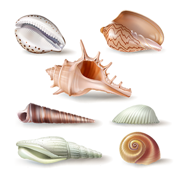 Clam vector conch. Oyster png vectors psd