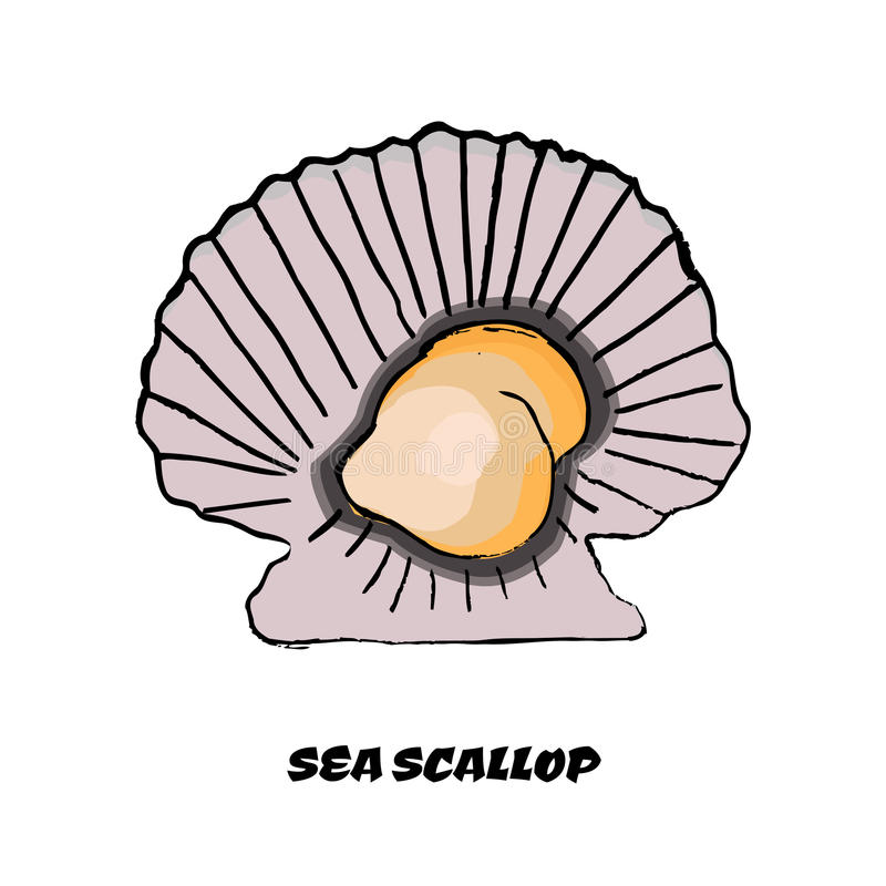 Oyster clipart colorful. Sketch scallop as a banner