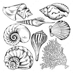 Oyster clipart fossil shell. Oysters stock vector illustration image freeuse download