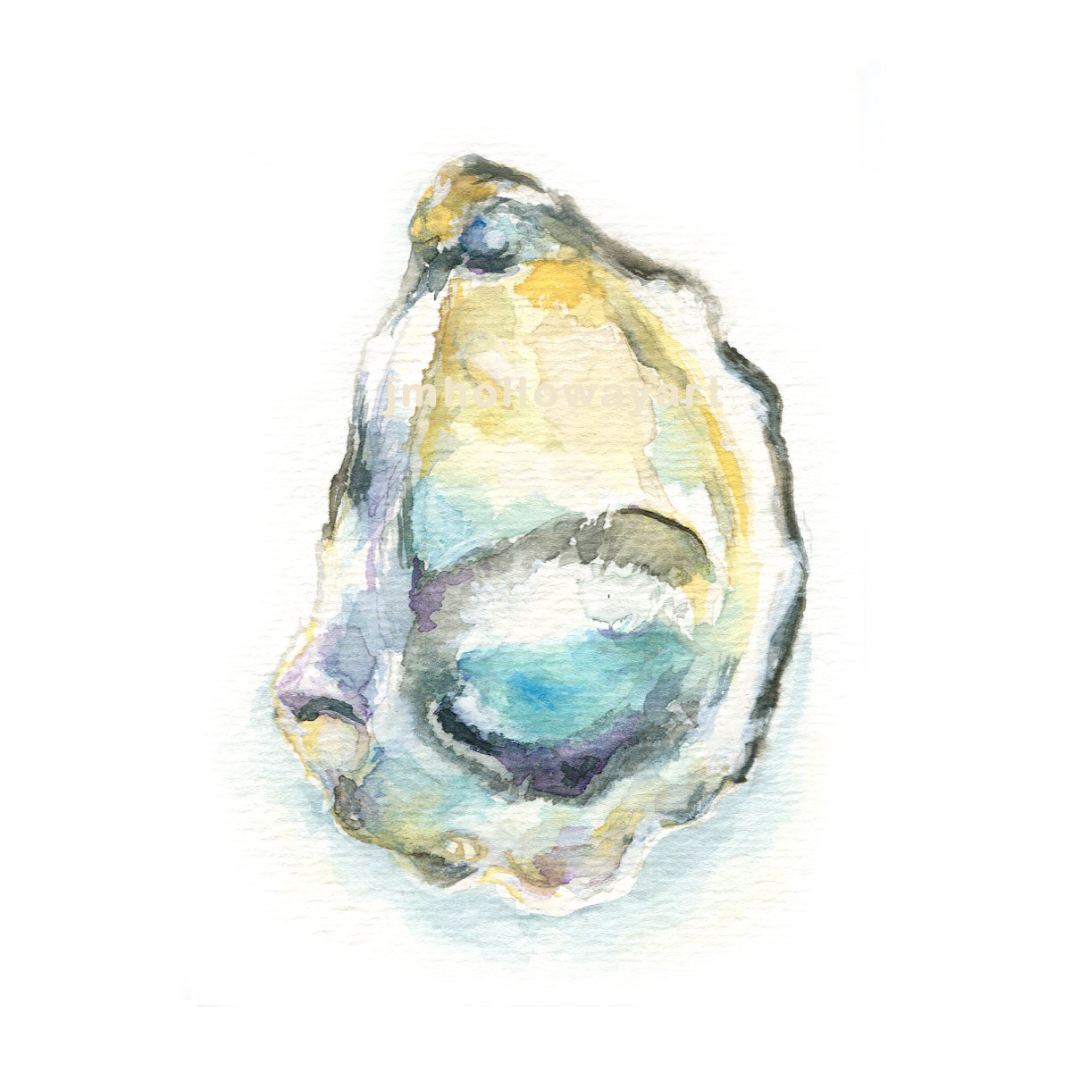 Oyster clipart watercolor. Shell drawing at getdrawings clip art freeuse stock