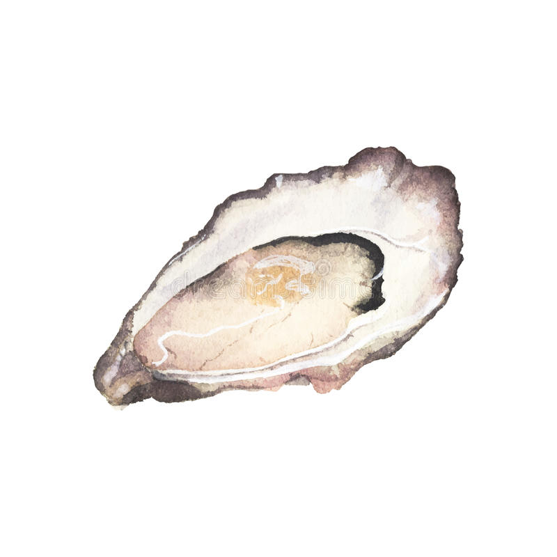 On the white background. Oyster clipart watercolor svg black and white library