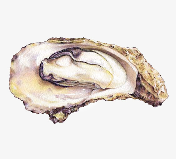 Oyster clipart watercolor. Oysters wash illustration seafood jpg royalty free library