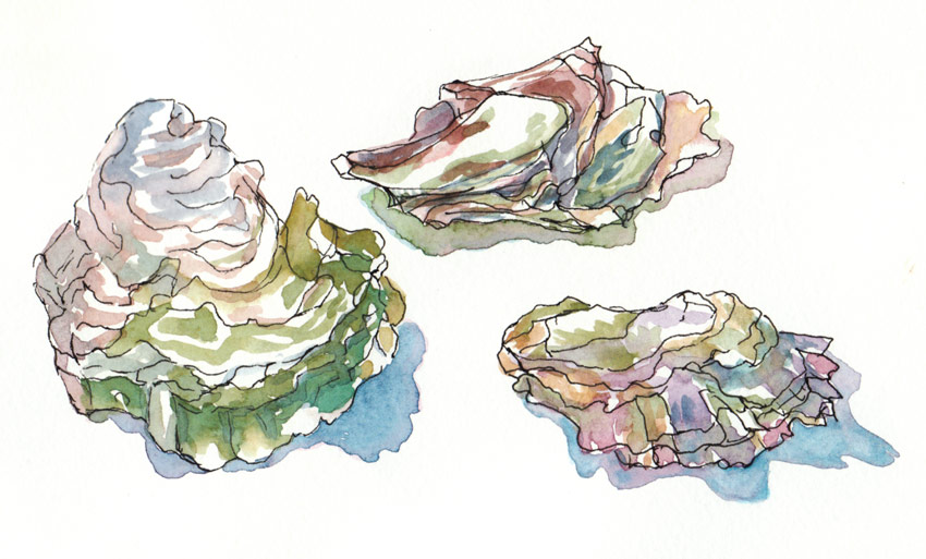 Oyster clipart watercolor. Drawing at getdrawings com image transparent library
