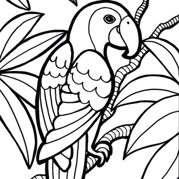Page clipart coloring. Pictures of parrots terrific