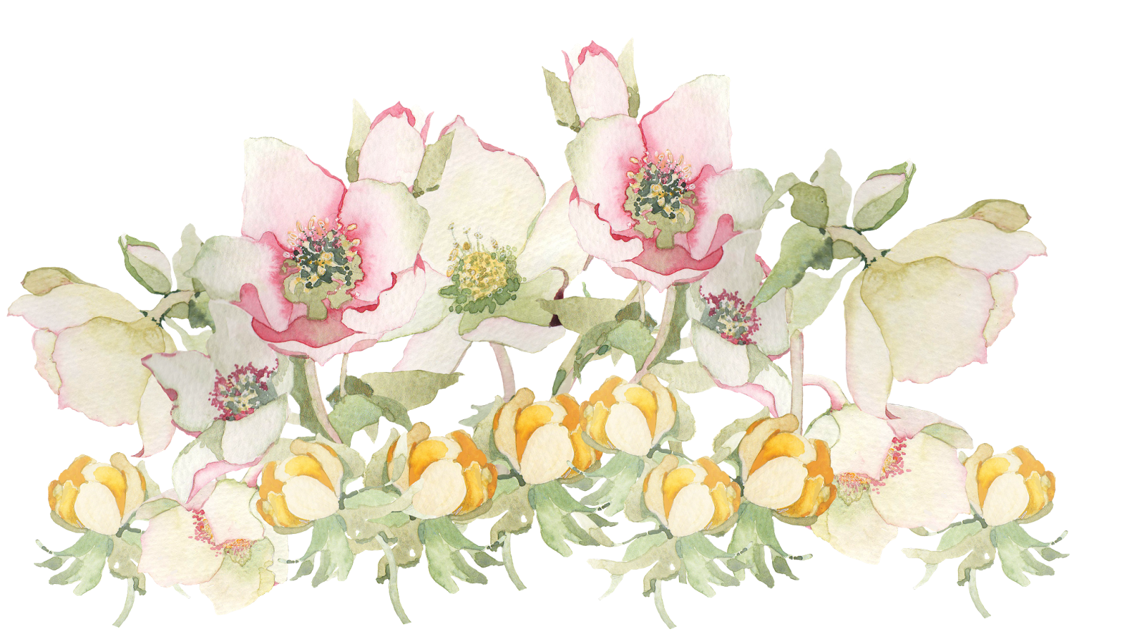 Painted flower png. Spring flowers transparent pictures