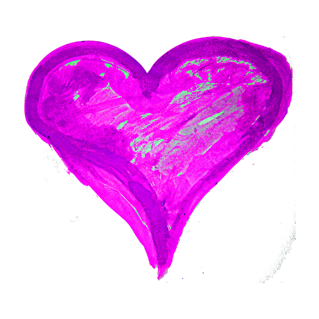 Painted heart png. Hand paintedwatercolor vector clipart