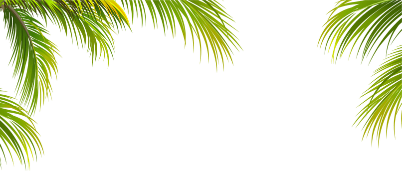 Palm tree frame png. Photo foxytoon co for